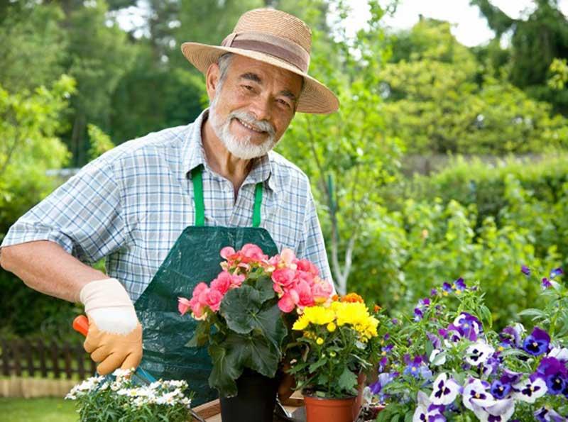дедушка обрезает цветы
