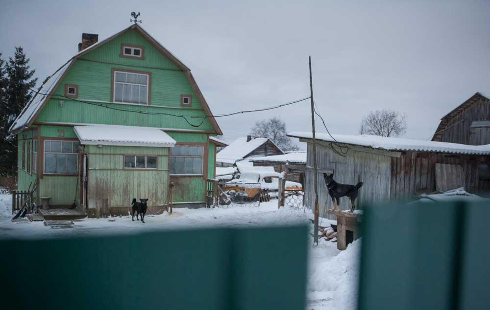 двор зимой с черными собаками и домом