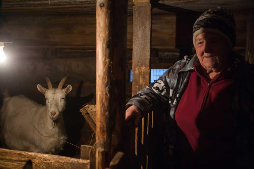сарайс козами