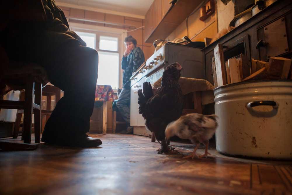 куры на кухне