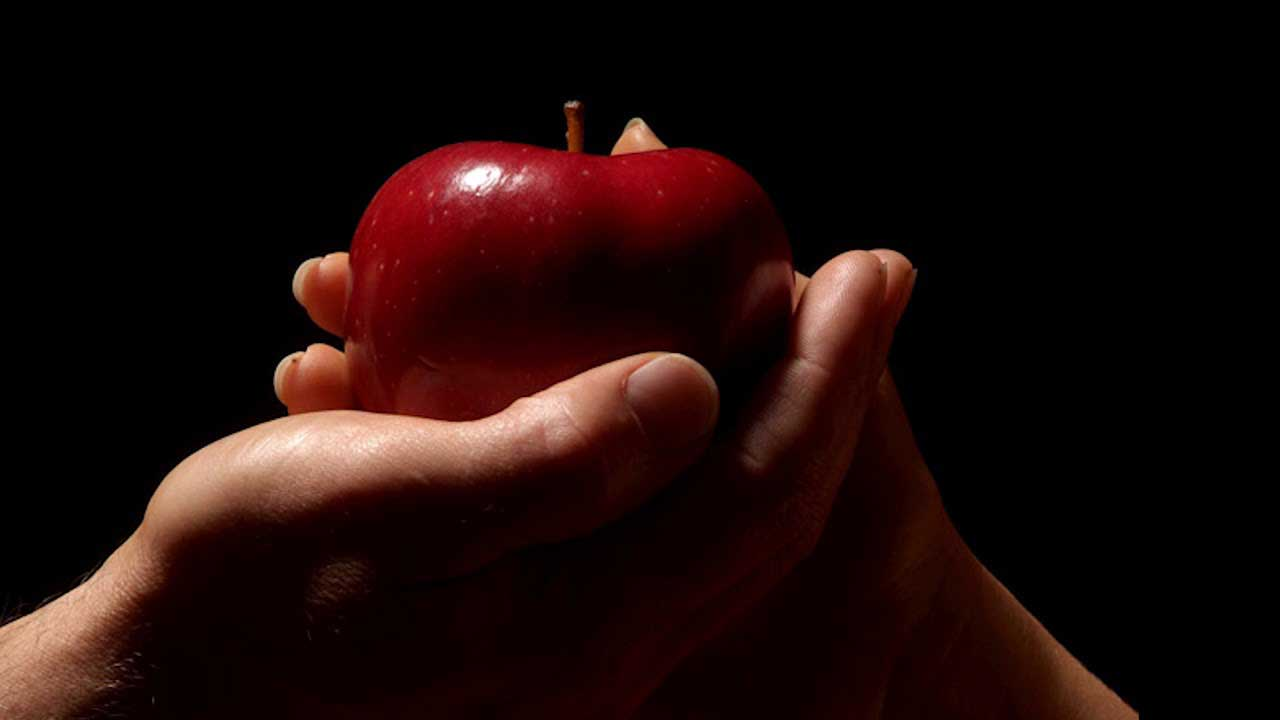 Про мусорное ведро, яблоки, токсины и детское богословие