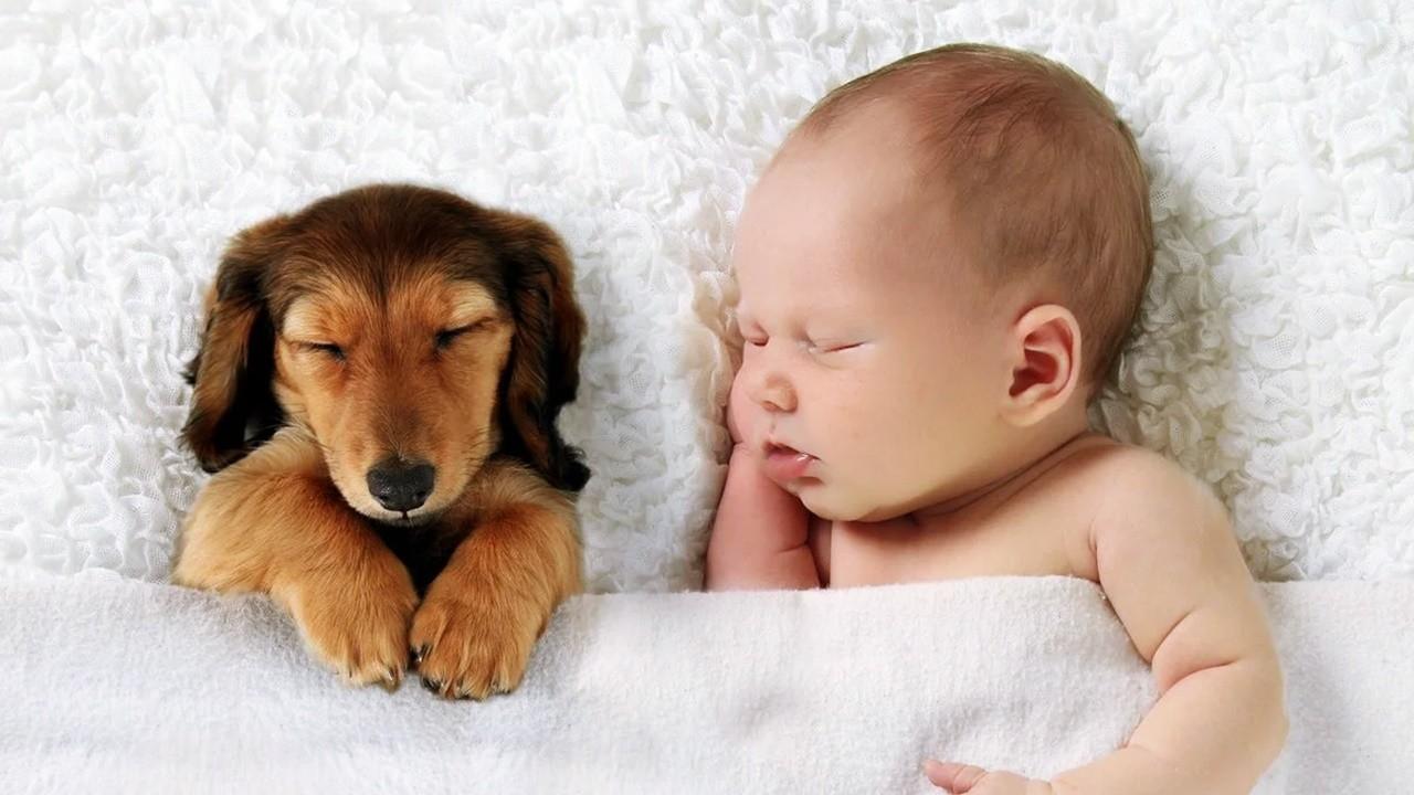 """Курьёзы Конституции. Поправка """"о правах собак""""?! А кто защитит детей?!"""